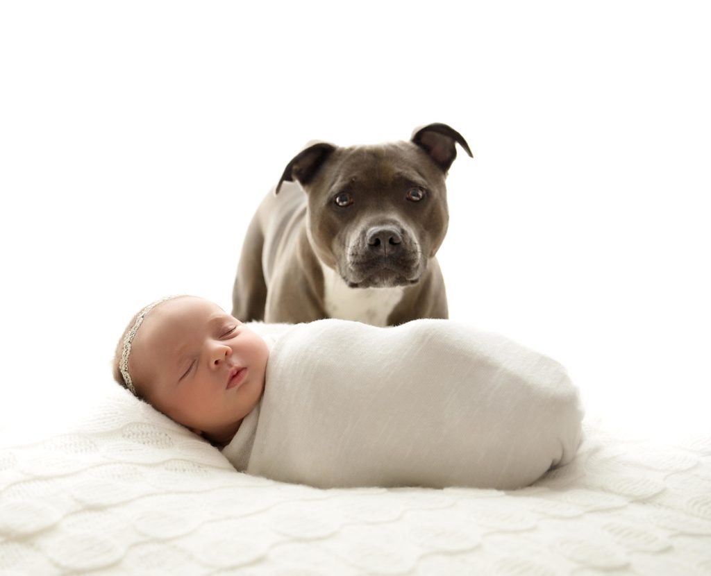 Newborn baby laying down with dog behind her for newborn photography